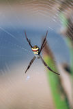 Araignée sur la toile d'araignée images libres de droits