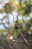 Araignée sur la toile d'araignée Photographie stock