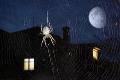 Araignée sur la toile d'araignee Photo libre de droits