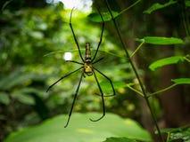 Araignée sur la toile d'araignée dans la forêt Photographie stock