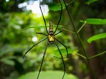 Araignée sur la toile d'araignée dans la forêt Photos stock
