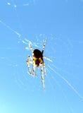 Araignée sur le fond de ciel bleu Contre le soleil Photos stock