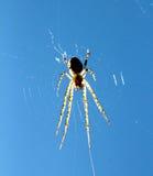 Araignée sur le fond de ciel bleu Contre le soleil Photo stock