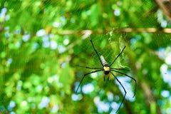 Araignée sur le Web Photographie stock