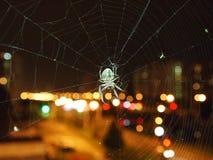 Araignée sur le Web dans une ville Photo stock