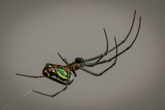 Araignée sur son Web Photo stock