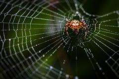 Araignée sur son Web Photographie stock