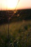 Araignée sur un coucher du soleil de Web Image libre de droits