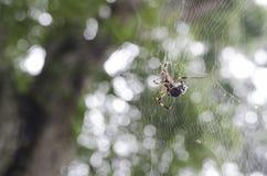 Araignée sur un Web 2 Photos libres de droits