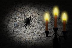 Araignée sur un Web Image libre de droits