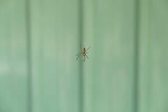 Araignée sur un Web Photo stock