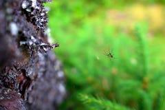 Araignée sur un Web dans le plan rapproché de forêt photos libres de droits