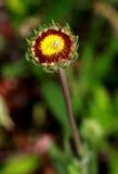 Araignée sur une fleur Photographie stock