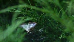 Araignée tenant sa victime un papillon sur la toile d'araignée clips vidéos