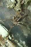 Araignée tropicale sur un Web Photo libre de droits