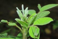 araignées Photo libre de droits