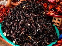 Araignées cuites à la friteuse Photos stock