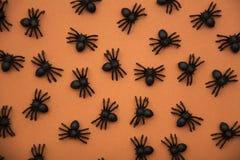 Araignées de Halloween sur l'orange Photographie stock