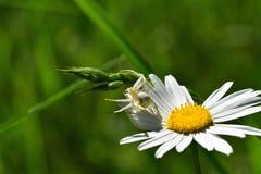Araignées, insectes et fleurs de la forêt de Moulière (Les Closures - La Grosse Boussée - La Fontaine Salée) Royalty Free Stock Photo