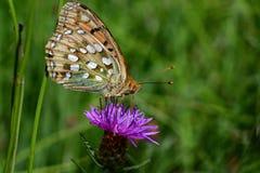 Araignées, insectes et fleurs de la forêt de Moulière (Les Closures - Le Marchais aux Canes) Royalty Free Stock Photos