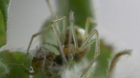Araign?e de jardin sur le Web banque de vidéos