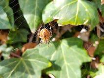 Araign?e sur le spider& x27 ; Web de s avec le paysage et le fond vert images libres de droits