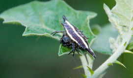 araignée Photographie stock