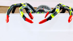 Araignée en plastique de jouet dans la boîte Photo stock