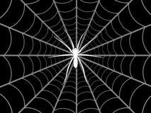 Araignée et Web Photos libres de droits