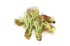 Aralia Sprout Stock Image
