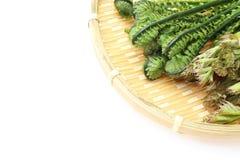 Aralia Spruit en Struisvogelvaren op een bamboevergiet Royalty-vrije Stock Afbeelding