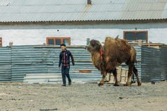 Aralsk, Kazakhstan - April 24, 2017: Kazakh country boy with camel royalty free stock photos