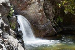 Araluen在Eungella国家公园,澳大利亚下跌 免版税库存图片