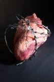 Arame farpado da ferida do coração. fotos de stock