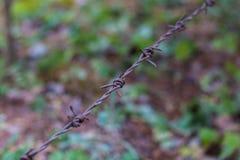 Arame farpado isolado em um fundo obscuro da floresta Imagens de Stock Royalty Free