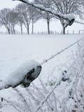 Arame farpado na paisagem nevado imagens de stock