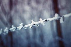 Arame farpado no inverno Imagem de Stock Royalty Free