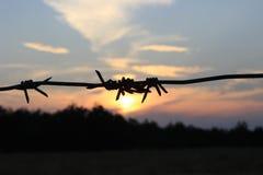 Arame farpado no por do sol Imagem de Stock Royalty Free