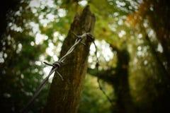 Arame farpado Tangled Foto de Stock Royalty Free