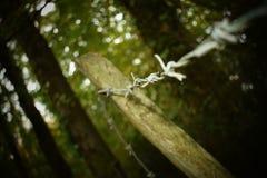Arame farpado Tangled Imagens de Stock