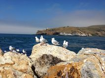 Aramoana seagulls royalty free stock images