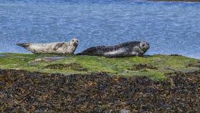 Aran Islands - Inishmore Fotografie Stock Libere da Diritti