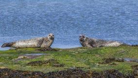Aran Islands - Inishmore Royalty-vrije Stock Afbeeldingen