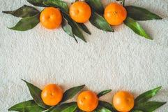 Arance dei mandarini, mandarini, clementine, agrumi con le foglie, fondo, spazio della copia immagine stock libera da diritti