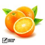 Arance fresche rassodate di vettore realistico intere ed arancia affettata con le foglie e le gocce di rugiada illustrazione vettoriale