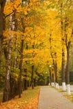 Aranci di autunno Fotografia Stock