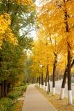 Aranci di autunno Fotografia Stock Libera da Diritti