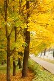 Aranci di autunno Fotografie Stock Libere da Diritti