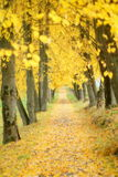 Aranci di autunno Immagine Stock Libera da Diritti