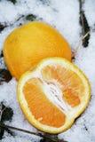 Aranci nella neve fotografia stock